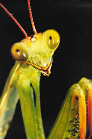 Ojo con los insectos