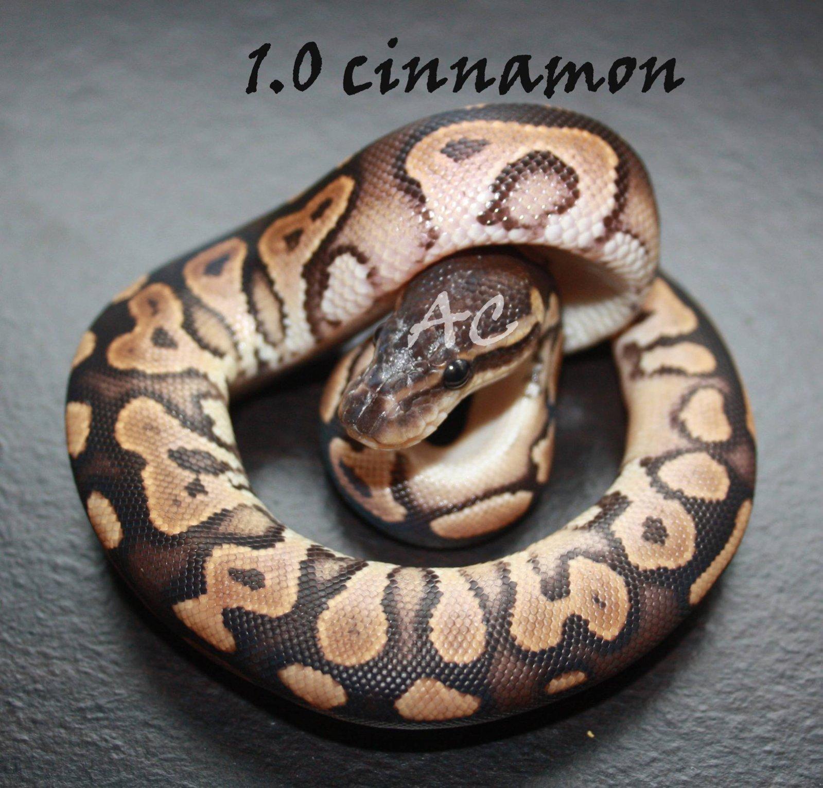 cinn2.jpg