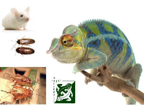 mix reptiles insectos.JPG