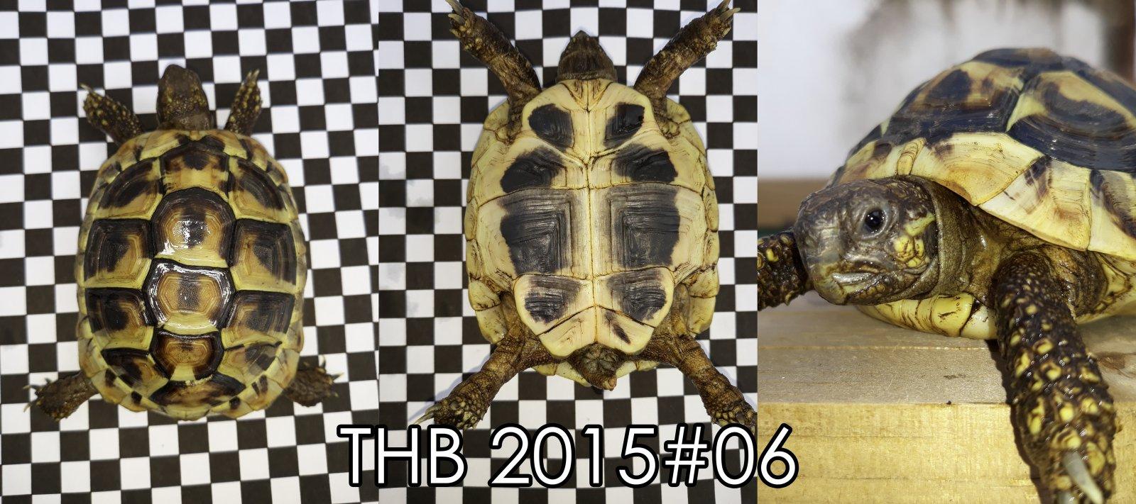 THB2015#6.jpg