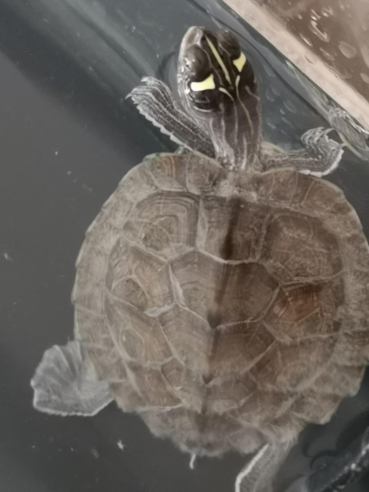 Tortugas Hector (1).jpg