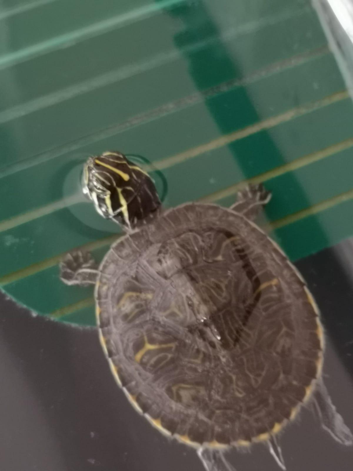 Tortugas Hector (2).jpg